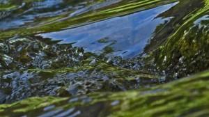 Water Cas.