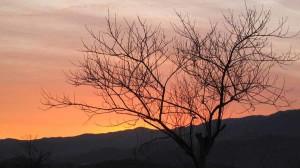 Winter tree sunset