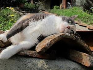 catrest